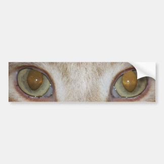 Cat Eyes Bumper Sticker Car Bumper Sticker