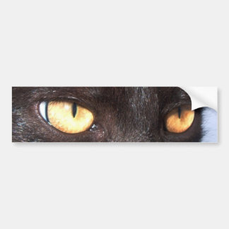 cat eyes bumper sticker