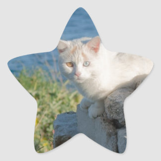Cat eyes star sticker