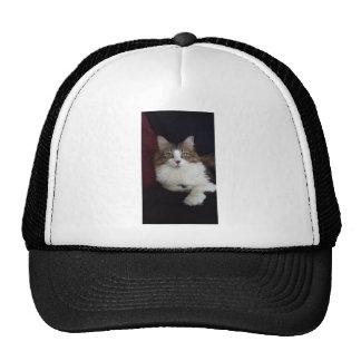 Cat Face Cap