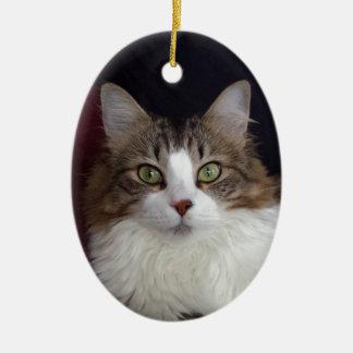 Cat Face Ceramic Oval Decoration