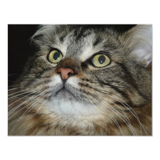 cat face personalized announcement