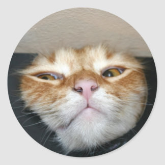 Cat face round sticker