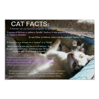 Cat facts 2 posters
