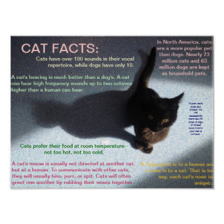 Cat facts 4 poster