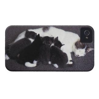 cat feeding kitten iPhone 4 Case-Mate cases