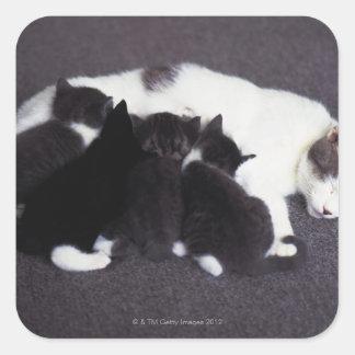 cat feeding kitten square sticker