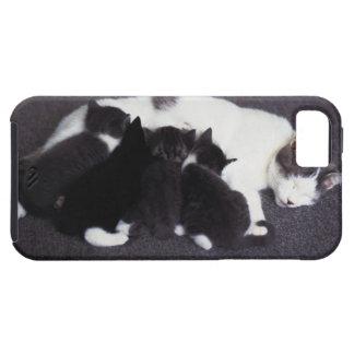 cat feeding kitten tough iPhone 5 case
