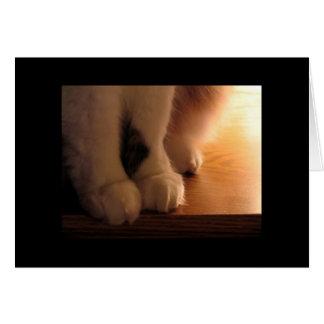 Cat feet card