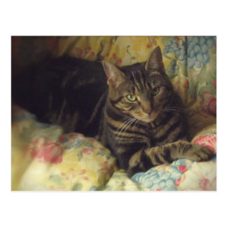 Cat Fine Art Photo Postcard