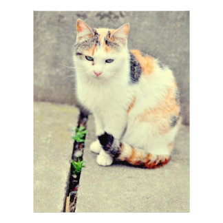 Cat Flyer Design
