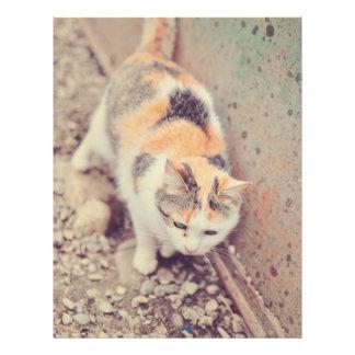 Cat Flyers