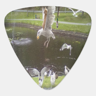 Cat flying a Seagull Plectrum