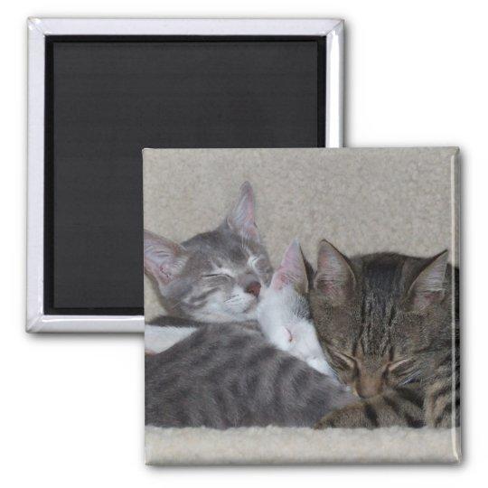 Cat Fridge Magnets
