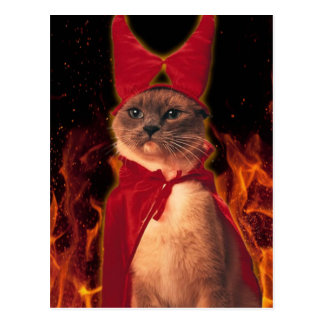 Cat From Hell Postcard