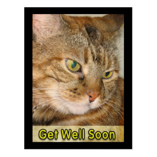 cat get well soon postcard