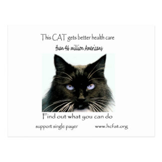 Cat Gets Better Care Postcard