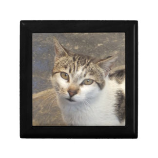 Cat gift / jewelry / trinket box
