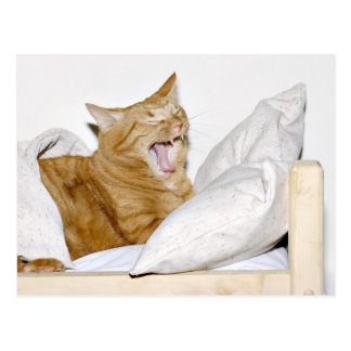 Cat hates mornings postcard
