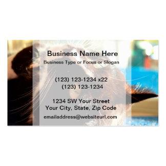 cat head in sunlight neat animal feline image business cards