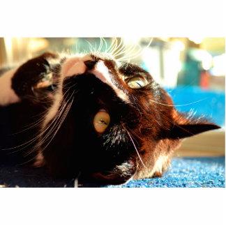 cat head in sunlight neat animal feline image cut out