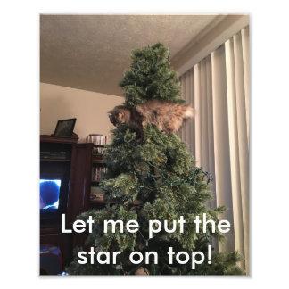 Cat helps decorate tree photo art