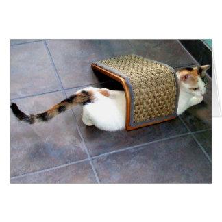 Cat Hiding Card