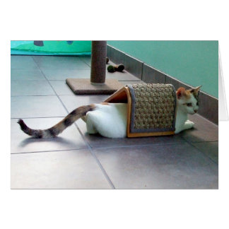 Cat Hiding Greeting Cards