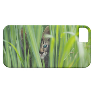 Cat hiding in grass barely there iPhone 5 case