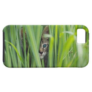 Cat hiding in grass iPhone 5 cases