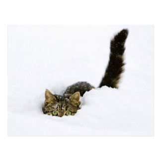 Cat Hiding In The Snow Postcard