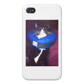 Cat Humor Cases For iPhone 4