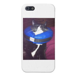 Cat Humor iPhone 5/5S Cases