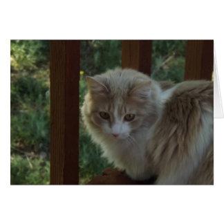 Cat I Miss You Card