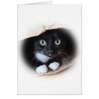 Cat in a bag card