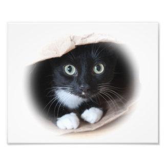 Cat in a bag art photo