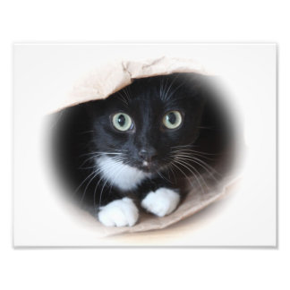 Cat in a bag photographic print