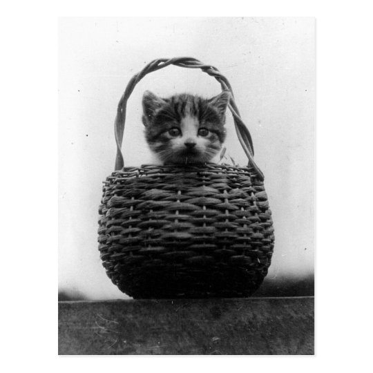 Cat in a Basket Vintage Photo Postcard