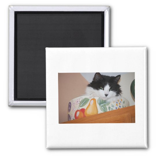 Cat in a Fruit Bowl Square Magnet