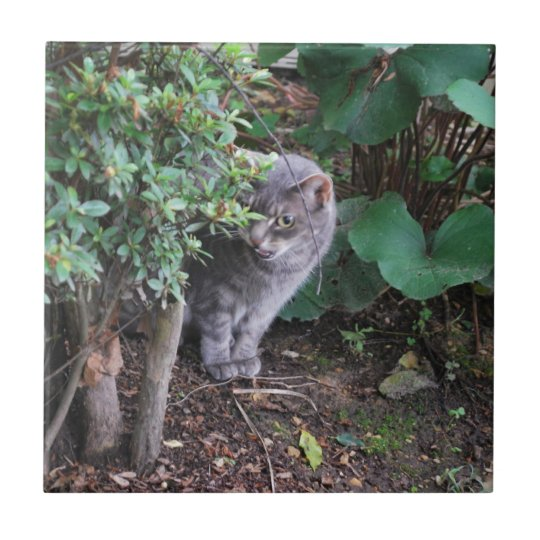cat in a garden small square tile