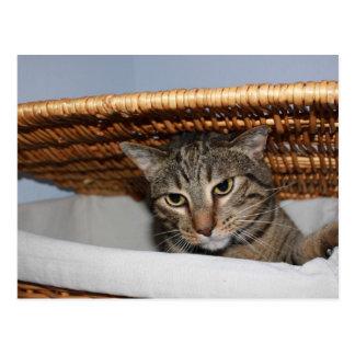 Cat in a hamper postcard