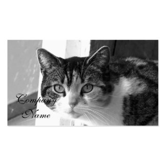 Cat in black and white business card templates
