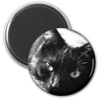 Cat in Black and White magnet