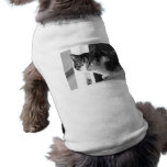 Cat in black and white pet tshirt