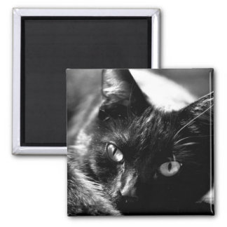 Cat in Black and White square magnet