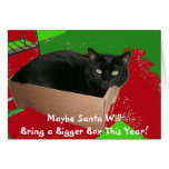 Cat In Box Christmas Card