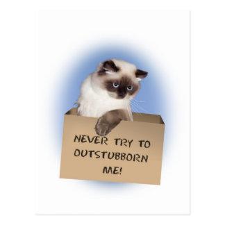 Cat in Box Himalayan Postcard