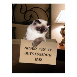 Cat in Box Postcard