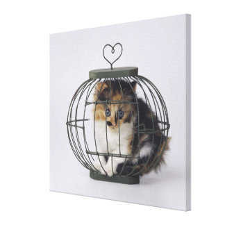 Cat in cage canvas print