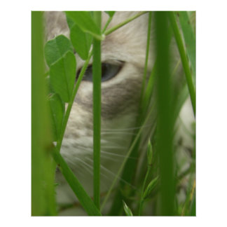 Cat in Grass Large Posters and Prints